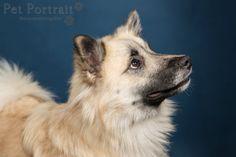 Hondenfotograaf Amsterdam - PetPlan Winner actie - Honden op de Winnershow-2