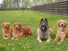 There's strength in numbers. #CutePetsCA #dogs #cuteanimals