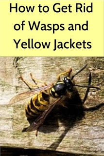 Garden and Yard: How to Get Rid of Pesky Wasps and Yellow Jackets Wasp Repellent, Cockroach Repellent, Yellow Jacket Trap, Yellow Jackets, Bug Control, Pest Control, Getting Rid Of Bees, Get Rid Of Wasps, Wasp Traps