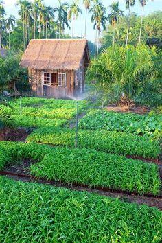 Idea Of Making Plant Pots At Home // Flower Pots From Cement Marbles // Home Decoration Ideas – Top Soop Eco Garden, Vegetable Garden Design, Fruit Garden, Edible Garden, Dream Garden, Permaculture, Bamboo House Design, Farm Stay, Farm Gardens