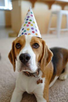 Party Beagle! Happy Birthday Mac!!