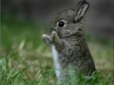 Pictures of adorable baby animals - guaranteed to make you smile! Baby hippos, baby elephants and even baby crocodiles. All types of super cute baby animals. Cute Animal Videos, Cute Animal Pictures, Funny Pictures, Rabbit Pictures, Cute Baby Animals, Animals And Pets, Funny Animals, Animal Babies, Animals Photos