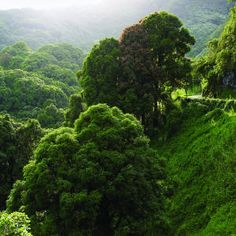 Highway to heaven: Perhaps the most beautiful 52 miles in the world Hana Highway twists and turns through incomparably lush Maui rain forest.