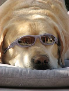 Dog Days of Summer: How to identify if your pet is suffering from heatstroke. Plus, get a $2 off COUPON for Pro-Sense pet products.