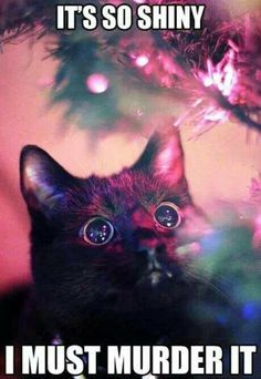 Love this Christmas tree cat