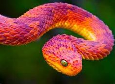 colorful oddest animals - - Yahoo Image Search Results