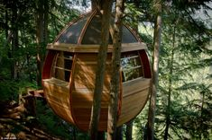 An amazing tree house built in a Canadian forest overnight.