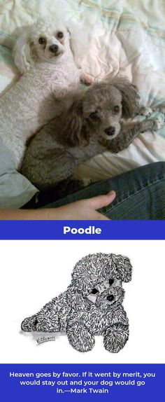 The Proud Poodle Dogs Exercise Needs Giant Poodle, Small Poodle, I Love Dogs, Cute Dogs, Poodle Haircut Styles, Chocolate Poodle, Lion Toys, French Dogs, Teddy Bear Toys
