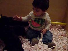 Fotos y videos de Labrador Retriever