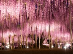 Ashikaga's flower park Japan20 Places That Are Straight Out of Fairy Tales - Condé Nast Traveler