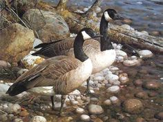 Original Painting, The Survivors - Canada Geese by Carl Brenders