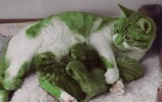 Green cats have sprung from the modern gene pool