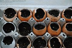 Read about this in Urban Farm Magazine....great way to recycle and not buy seed starting peat pots each spring.... Eggshell Seed Starter