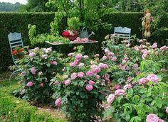 www.rustica.fr - Un rosier pour chaque situation