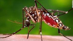 Más de 12 mil casos de dengue y mil 714 de chikungunya en Ecuador