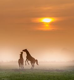 Dancing with Horses........... - i love the morninglight