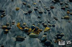 Screen Background of Rocks on the Beach at Torrey Pines State Beach, Torrey Pines, California Torrey Pines, Beach Rocks, Texture Art, Perfume, California, Cool Stuff, Beautiful, Fragrance