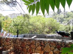 Haifa, the Zoo