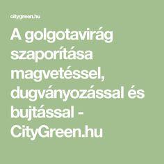 A golgotavirág szaporítása magvetéssel, dugványozással és bujtással - CityGreen.hu