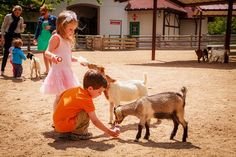 Animal Fun at in St. Louis | St. Louis, MO :: Ettractions.com Petting #zoos, #rides, and unique #animal interactions appeal to kids and parents alike. Luckily for anyone heading to St. Louis, MO, #GrantsFarm is a #menagerie of epic proportions.