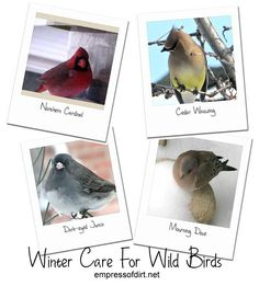 Winter Care For Wild Birds