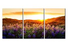 Canvas Print Wall Art Painting For Home Decor Floral Landscape Of Purple Provence Lavender Field With Sunrise Sunshine 3 Pieces Panel Paintings Modern Giclee Stretched And Framed Artwork The Picture For Living Room Decoration Flower Pictures Photo Prints On Canvas -- Want additional info? Click on the image.