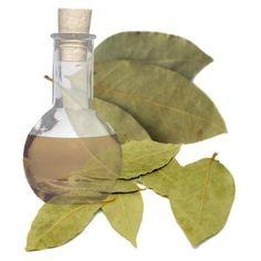 Esencia aromática de Laurel, para hacer #jaboncitos y velas con un aroma muy original.  Encuéntralo en Gran Velada.