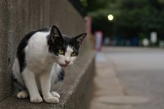 猫の目スチル (2004~2008) 奏楽堂わきの猫