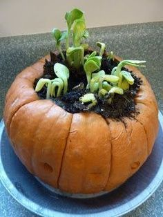 Love this pumpkin garden for fall homeschool science and Exploring Creation with Botany! A fun pumpkin experiment! Fall Preschool, Kindergarten Science, Preschool Ideas, Science Experiments Kids, Science For Kids, Ag Science, Science Lessons, Teaching Science, Autumn Activities