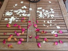 Collecting rose petals for confetti