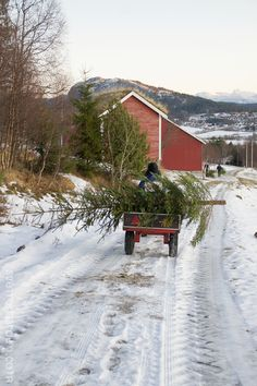 Bringing home the tree...God Jul http://www.svenngaarden.com/2012/12/god-jul.html?m=1