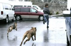 Jared behind the scenes being chased by his dogs- too cute! I do the same thing playing with Rue haha
