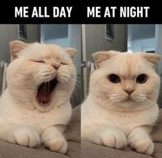 Memes Humor, Funny Af Memes, Funny Animal Memes, Funny Animal Videos, Videos Funny, Cat Memes, Funny Cats, Funny Animals, Funny Humor