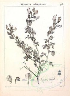 botanical-07596 - black_and_white [2304x3146]