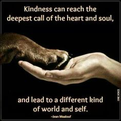 135 Best Kindness Images Thoughts Truths Buddha