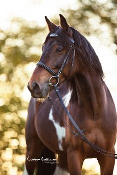 Beautiful horse with white on his belly. (99) Larissa Krämer Fotografie - Photos