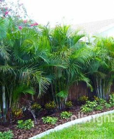If you are working with the best backyard pool landscaping ideas there are lot of choices. You need to look into your budget for backyard landscaping ideas Tropical Backyard Landscaping, Palm Trees Landscaping, Tropical Garden Design, Florida Landscaping, Privacy Landscaping, Florida Gardening, Backyard Garden Design, Outdoor Landscaping, Front Yard Landscaping
