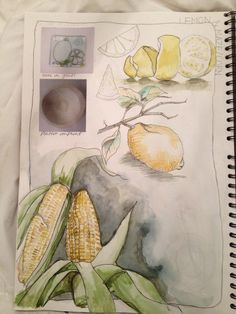 "amygration - ""lemon & corn"" sketchbook"