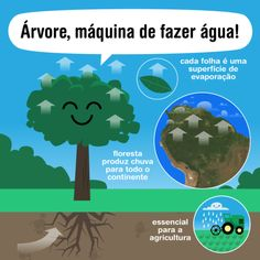 Our Planet, Planet Earth, Tree Day, Environmental Studies, Rio Grande Do Norte, Worlds Of Fun, Sustainability, Acting, Study