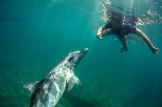 Australia  Situado en una península en el oeste de Australia, Bunbury es famoso por los simpáticos delfines salvajes que interactúan con la gente en Koombana Bay. Como se puede ver, son sin duda no la cámara tímido! (Foto: www.mattblakersphoto.com)