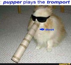 puppet plays the tromport - Google Search