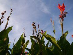 자라섬에 높게 뻗어 있던 꽃들
