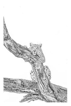 BW fine art image of a leopard in a tree by wildlife photographer Dave Hamman Insect Photography, Wildlife Photography, Animal Photography, The Great Migration, Charcoal Art, Black And White Drawing, African Animals, Picture Collection, Wildlife Art