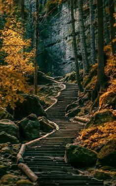 Een trap leidt vanuit het naaldwoud de Freische bergen in