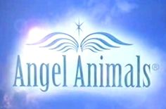 ANGEL ANIMALS NETWORK