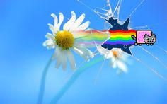 nyan cat picture hd