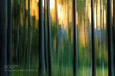 Let it Go - Pinned by Mak Khalaf Abstract abstractbirchforestlightnorthpinesunsunsettreetreeswinter by editberes22
