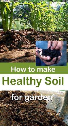 Rich soil contains microscopic worms and organisms, they get a proper atmosphere in the healthy soil to grow these worms, small insects and microbes.