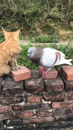 Beautiful creatures · animals beautiful · must be ny pigeon cute animal videos, funny animal pictures, funny animals, gato Cute Funny Animals, Cute Baby Animals, Animals And Pets, Cute Cats, Funny Cats, Animal Antics, Animal Memes, Cute Animal Videos, Funny Animal Pictures