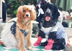 fred e ginger canini nel Halloween 2018, Dogs, Animals, Animales, Animaux, Pet Dogs, Doggies, Animal, Animais